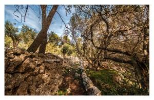 03 La vegetazione che ricopre la costa adriatica _DSC0552 M © MAURO PALANO