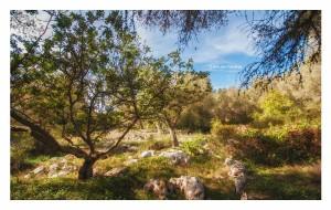 04 Un piccolo boschetto di Carrubi _DSC0556 M © MAURO PALANO