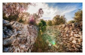 08 E dopo un mare azzurro un mare di ulivi e pietre ci accoglie _DSC0676 M © MAURO PALANO