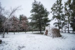 3 - Il quercieto sotto la neve