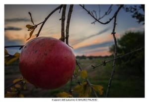 Il sapore dell'autunno nel Salento by www.tenutakyrios.it © MAURO PALANO