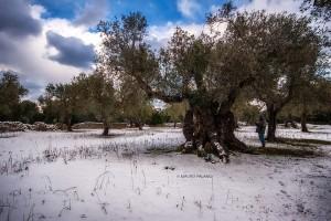 La neve del 2019 sulla campagna circostante la Tenuta Kyrios © MAURO PALANO by www.tenutakyrios.it