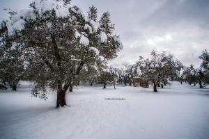 La neve del 2019 sulla campagna circostante la Tenuta Kyrios 01 _DSC0824 M © MAURO PALANO