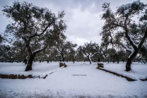 La neve del 2019 sulla campagna circostante la Tenuta Kyrios 02 _DSC0887 M © MAURO PALANO