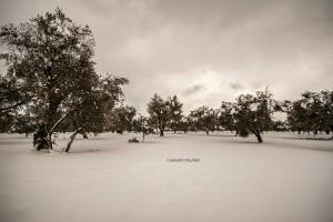 La neve del 2019 sulla campagna circostante la Tenuta Kyrios 03 _DSC0900 M © MAURO PALANO