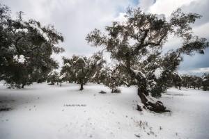 La neve del 2019 sulla campagna circostante la Tenuta Kyrios 04 _DSC0967 M © MAURO PALANO