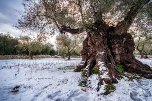 La neve del 2019 sulla campagna circostante la Tenuta Kyrios 05 _DSC0986 M © MAURO PALANO