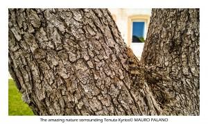 The amazing nature surrounding Tenuta Kyrios in Salento, by www.tenutakyrios.it © MAURO PALANO (1)